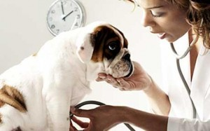 Five Tips to Saving Money on Pet Care and Vet Bills