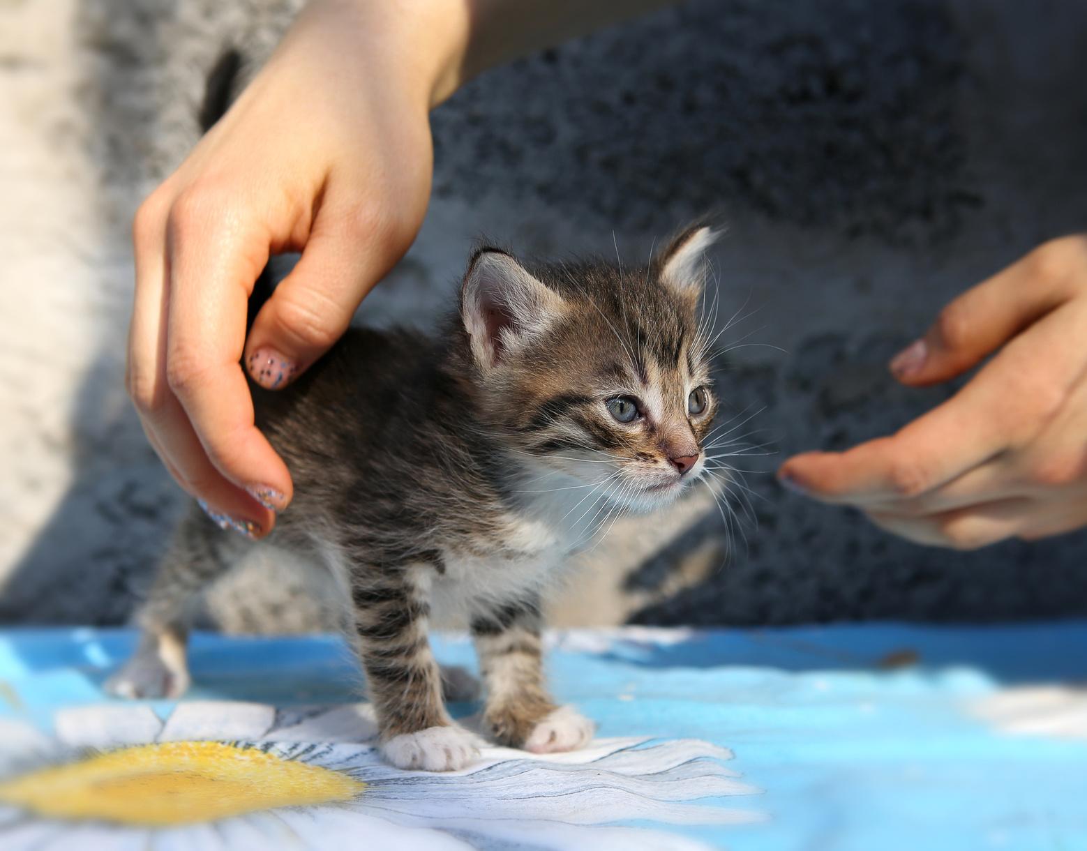 Бездомный котенок фото 7